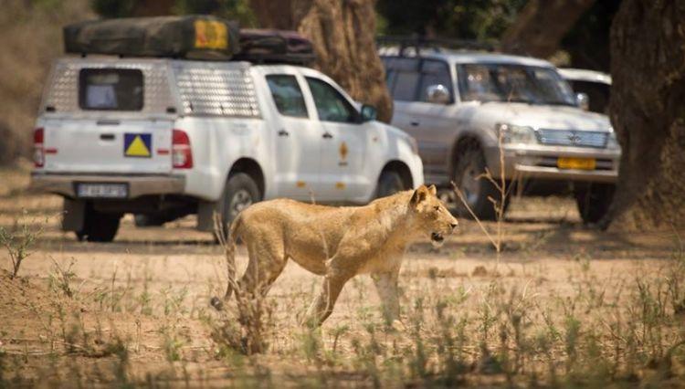 Acacia Car Rentals sees constant improvements since fitting Frotcom